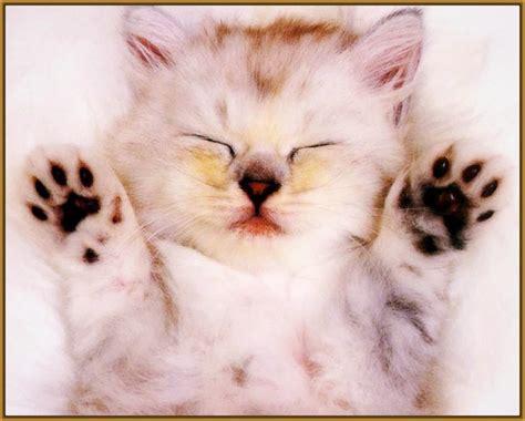 imagenes de cumpleaños lindos fotos de gatitos lindos para descargar gatitos tiernos