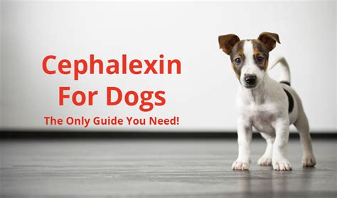 keflex for dogs cephalexin for dogs the only guide you need