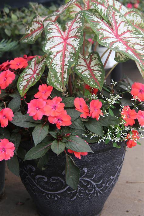knupper flower garden seasonal containers