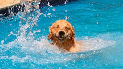 puppies in water dogs in water 107