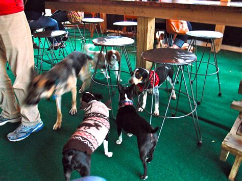 top dog bar the dog bar basil s travels