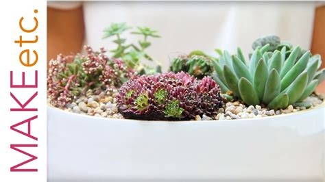 plant  succulent bowl house plant tutorial
