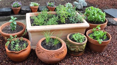 plant  culinary herb garden diy kitchen garden