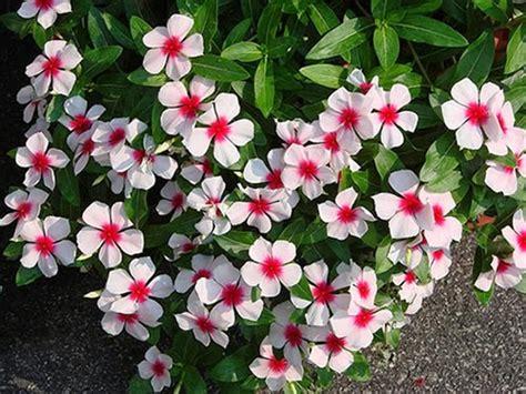 imagenes flores simples flores perenes para floreiras flores cultura mix
