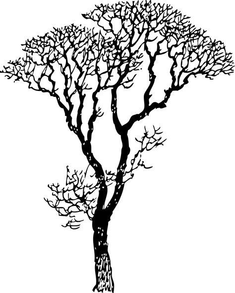 line drawings trees tree line drawings clipart best
