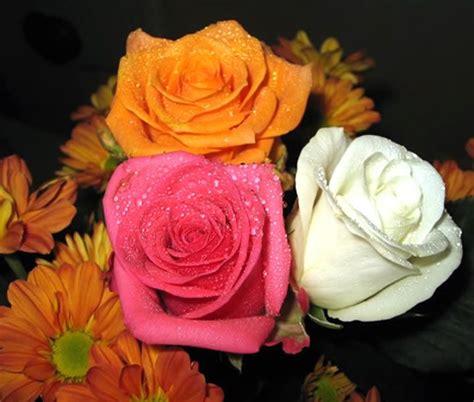 imagenes tres rosas tres rosas diferentes imagen 3695 im 225 genes cool