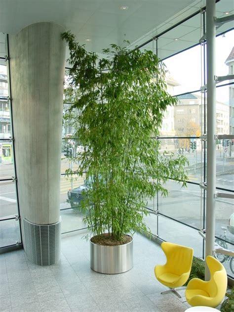 pflanzen indoor topf pflanzen indoor nino s g 228 rten