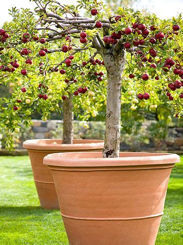 best way to water fruit trees grow your own apples gardens small yards and wanderlust