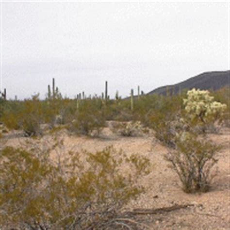 Pinal County Property Tax Records 1 2 Interest In Vacant Land In Pinal County Az Sold For 1 000 Carol Smith S