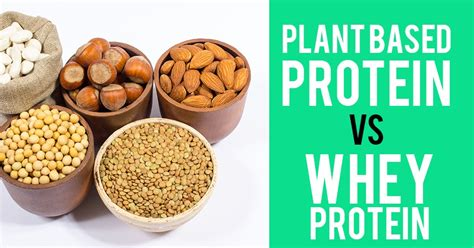 b protein vs whey protein plant based protein vs whey protein by abhpharmainc on