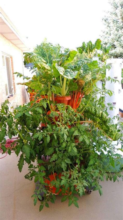 What Can You Grow In A Vertical Garden What Is Vertical Gardening 101 Grow Green Food