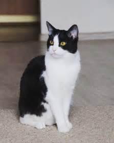 gentleman cat catpusic animal animals catlover catotheday cats catsofinstagram