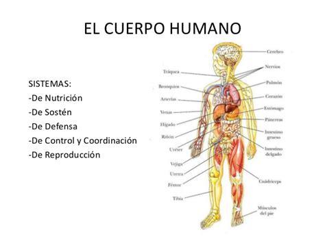 el cuerpo humano el cuerpo humano osteo artro muscular