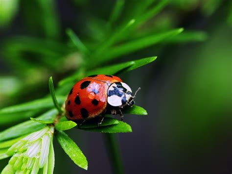 bug three bugs hd wallpapers bugs hd wallpaper amazing wallpapers
