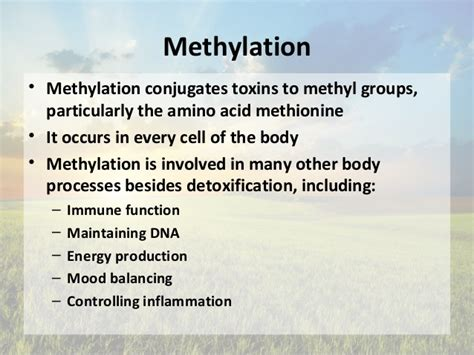 Liver Detox And Methylation by Aug Liver Detoxification