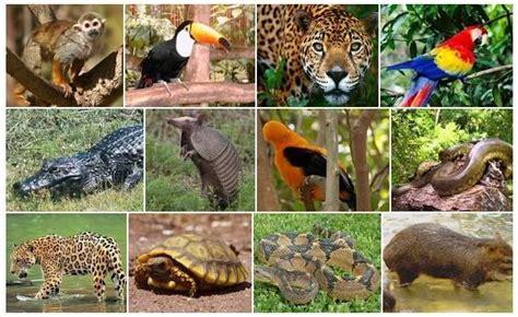 imagenes de animales y plantas de la selva animales de la selva peruana animalesde net