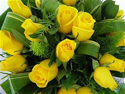 imagenes de flores amarillas image gallery imagenes rosas amarillas