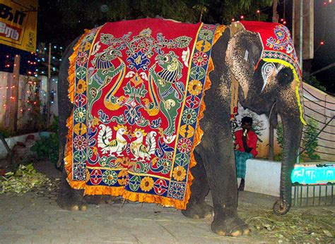 Decorated Elephants by Decorated Elephant Flickr Photo