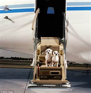 us airlines report 17 pet fatalities and 35 injuries in just one year daily mail