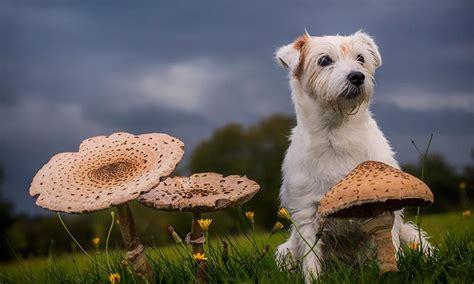 alimentos mascotas alimentos que pueden ser malos para tu perro foto