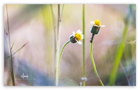 tulips flowers bokeh wallpaper 5120x3200 23648 pink lotus flower desktop background wallpaper free download