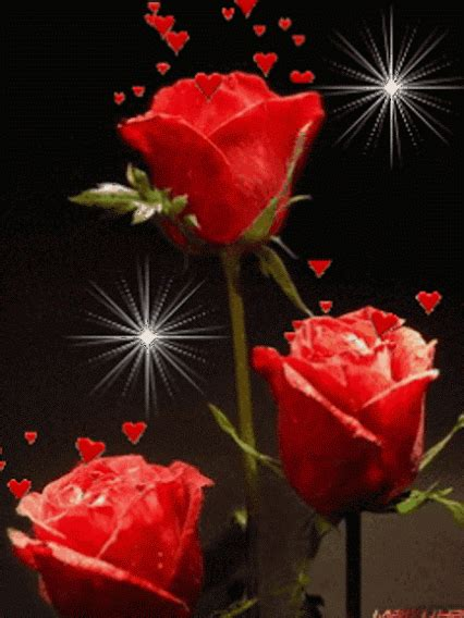 imagenes rosas hermosas animadas gifs animados rosas de color rojo 1000 gifs mesas