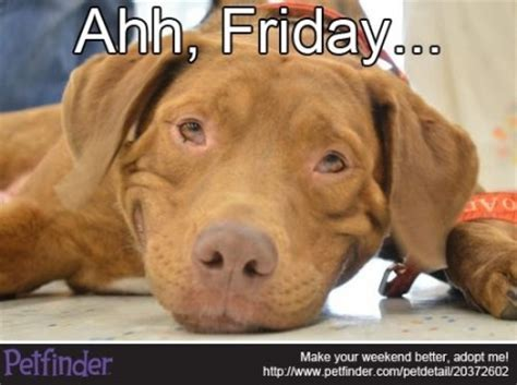 Dog Friday Meme - the top 10 adoptable pet memes of 2012 petfinder