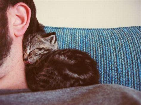 C Nel 038 animali e foto carine presi nel web con i nostri