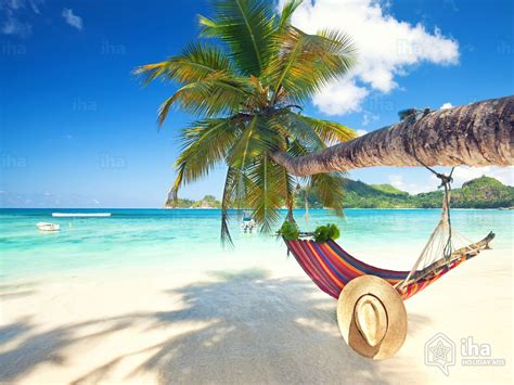 alquiler playa para sus vacaciones alquiler palm para sus vacaciones con iha particular