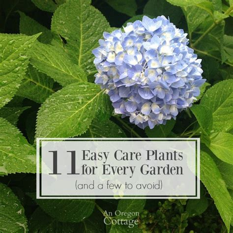 easy plants 11 easy care plants for every garden and a few to avoid