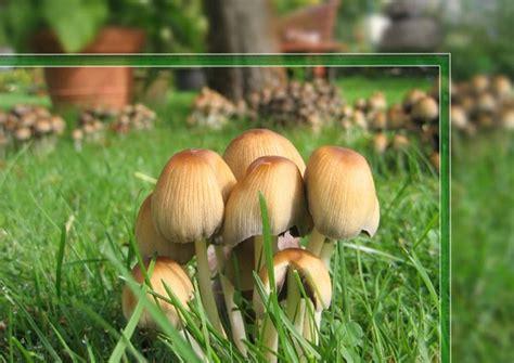 Braune Pilze Im Garten by Neuer Gartentraum September 2010