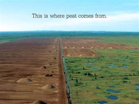 the peat atarian diet for those of us with average iqs peat moss is gardening crack root simple