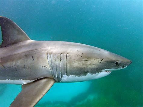 baby shark acoustic sharksmart home