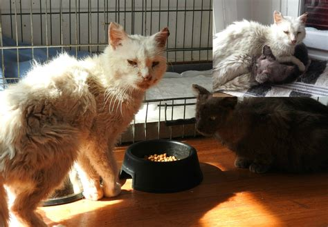 How To Comfort A Sick Cat by Two Sick Rescue Cats Find Comfort In Each Other S