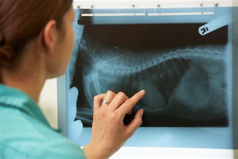 cost  veterinary care veterinarian cost prices  vet