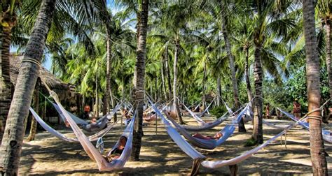 Hammock Hängematte by Hammocks In Xel Ha Park In Quintana Roo Mexico