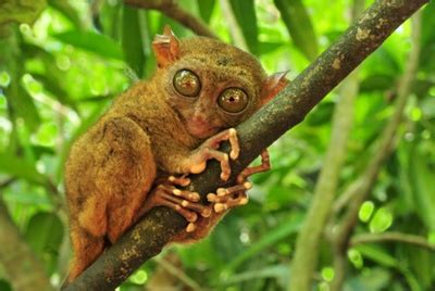 animals and plants that live in the tropical rainforest tropical rainforest animals