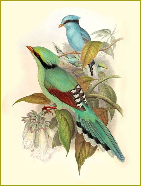 1000 ideas about 3 birds vintage pictures of birds www imgkid the image kid