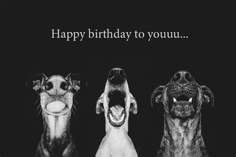 Happy Birthday Wishes Dogs Birthday Greetings For Dog Lovers Portrait Und