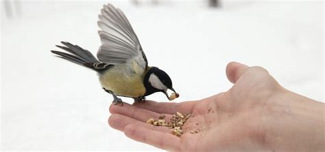 how to feed a bird how to clean how to attract