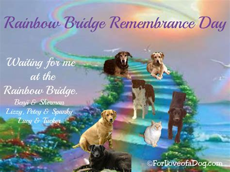 rainbow bridge for dogs talking dogs at for of a rainbow bridge remembrance day celebrating