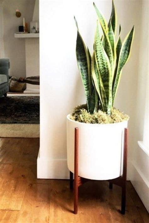 15 beautiful house plants that can actually purify your 1000 bilder zu indoor plants auf pinterest pflanzen