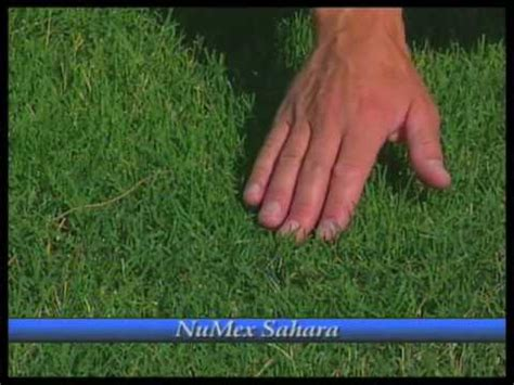 .bermuda grass seed frequently asked questions and answers sierra