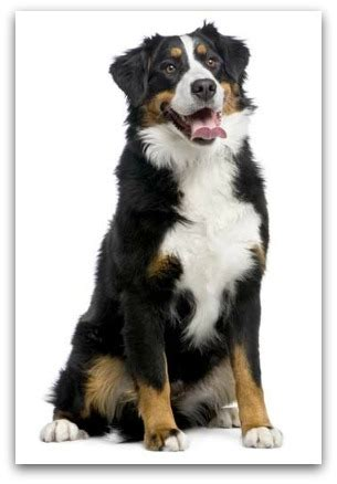 large breeds pictures and names large breeds list of large breeds