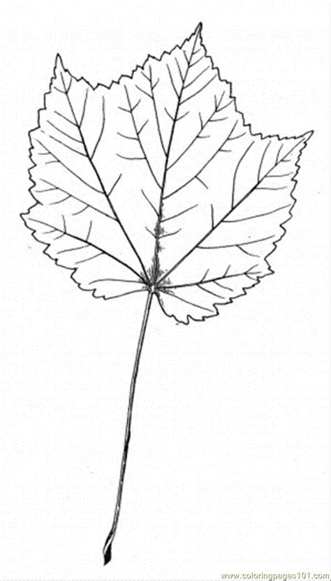 Maple Leaf Printable Coloring Home Maple Tree Coloring Page