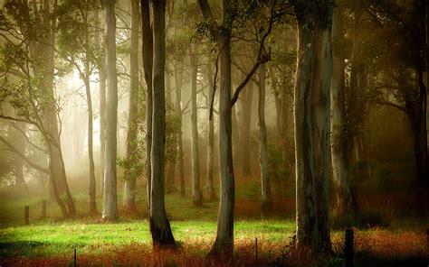 imagenes extrañas en el bosque d 237 a de verano en el bosque ver fondos de pantalla en