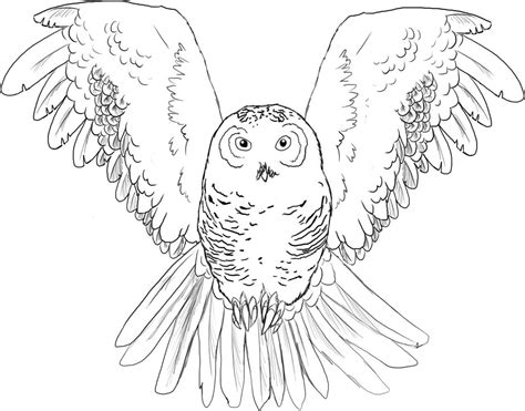 harry potter owl coloring pages harry potter owls flying coloring pages