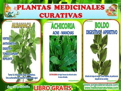 plantas medicinales 86 best plantas medicinales images on medicinal plants herbalism and herbs