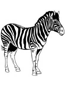 zebra color zebra realistic coloring