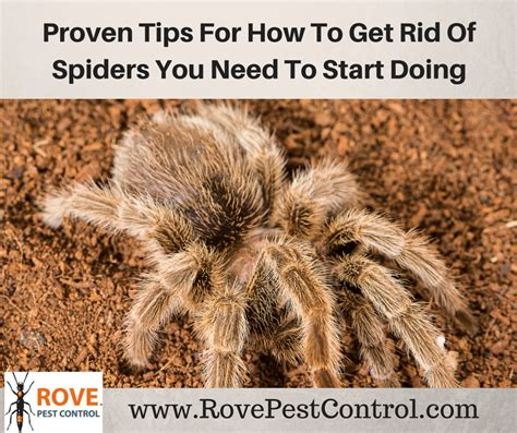 Five Tips On How To Get Rid Of Eye Circles And Puffiness by 5 Proven Tips For How To Get Rid Of Spiders You Need To